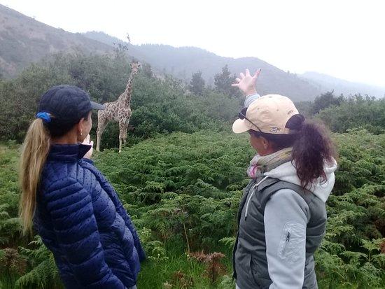 Giraffe View Safari Camp: Guided game walk R400 pp 5 km half price children under 16 yrs