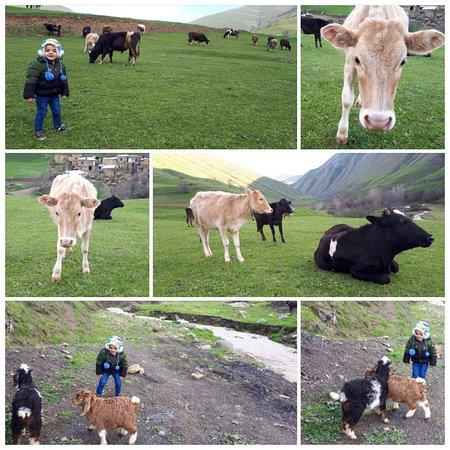 Ardabil Province, Iran: ✅ تجربه زندگی روستایی و تفریح با حیوانات در طبیعت  ⭕️ #اقامتگاه_بوم_گردی_شوون ▪️◽️ @ShowoonNomadEcoLodge