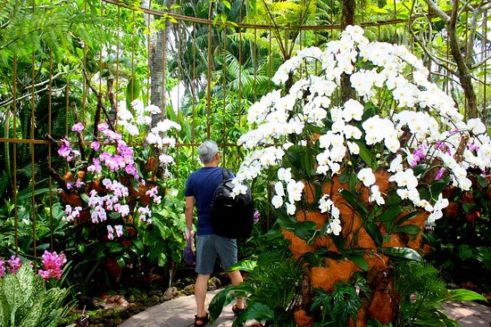 National Orchid Garden: Massif de vanda courantes