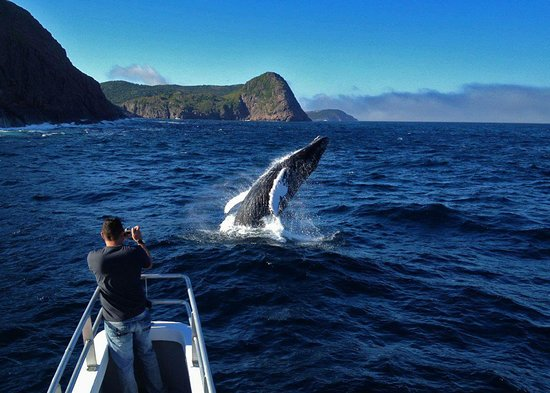 Iceberg Quest Ocean Tours: Humpback whale breaching off the bow captured with an Apple iPhone 5 by Captain Barry Rogers with Cape Spear in the backdrop. Show times vary.