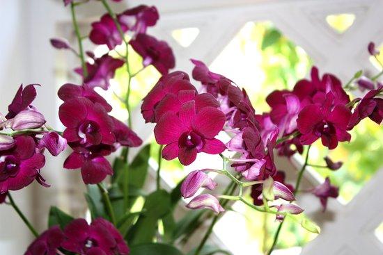 National Orchid Garden: Renanthera Sisoulith du Laos