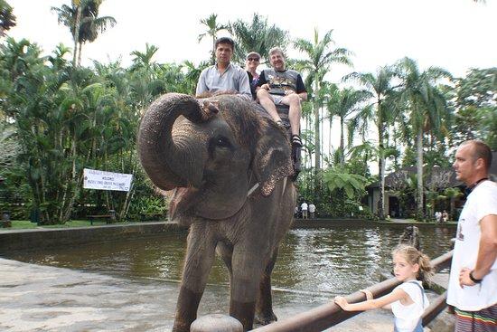 Pacific Jewel: Elephant Safari in Lombok