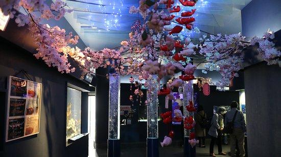 Shimoda Aquarium: 下田海中水族館1
