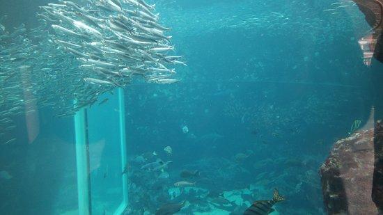 Shimoda Aquarium: 下田海中水族館3