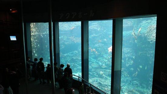 Shimoda Aquarium: 下田海中水族館4