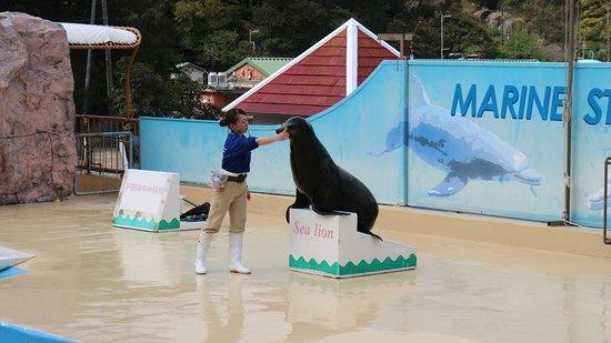 Shimoda Aquarium: 下田海中水族館5