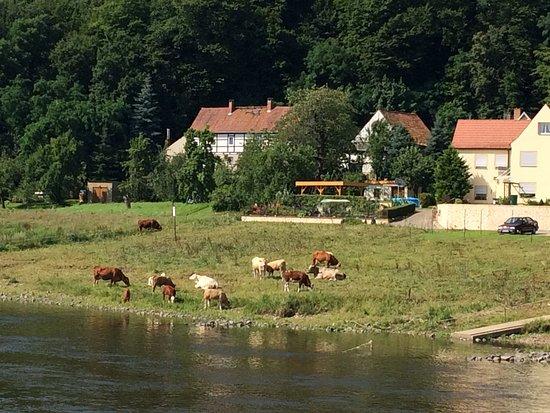 Viking Astrild: Scenery along the river.