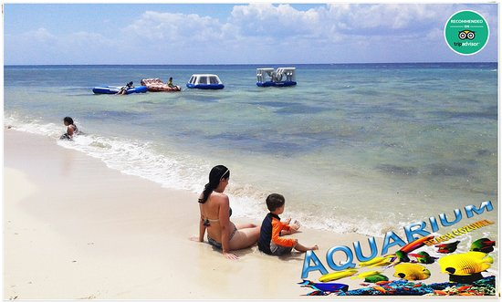 AQUARIUM Beach Cozumel: One of the beach clubs with friendly staff that will make your day memorable! We are known as the best on service to our guests and smile too! We have all those services you have in mind (JetSki, Parasailing, Banana Boat, Massage, Fish Spa, Souvenir Are, Snorkel, Private Boat Snorkel, Pool, Umbrellas, Beach chairs, Restaurant & Bar). •$20usd per person (Entrance Fee+Use of Facilities Only) *Other packages available at the main entrance. JOIN US! #LocalBeach #Beach #Cozume