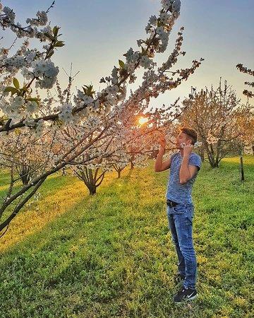 Pecetto Torinese, Italië: Spring has blossomed!🎨🤗  La primavera è il periodo in cui tutto nasce, tutto fiorisce, tutto sboccia e prende vita!❤🍒