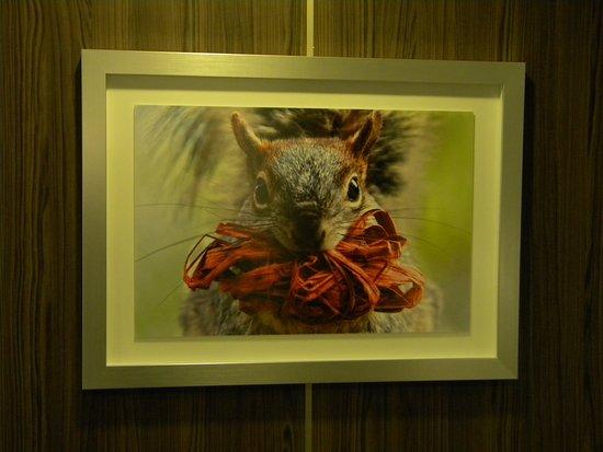 Anthem of the Seas: Artwork displayed near aft elevators