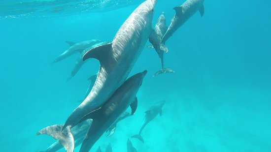 4 Hours Snorkeling With Dolphins Trip By A Private Speed Boat: having fun
