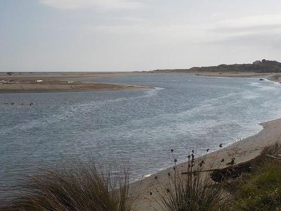 Waikanae Estuary Scientific Reserve