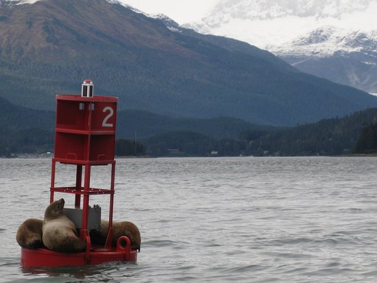 Norwegian Pearl: Juneau harbor seals