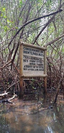 Ciénaga la Caimanera: No comer camarones
