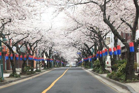 Jeju Jeonnonglo Beojkkochgeoli