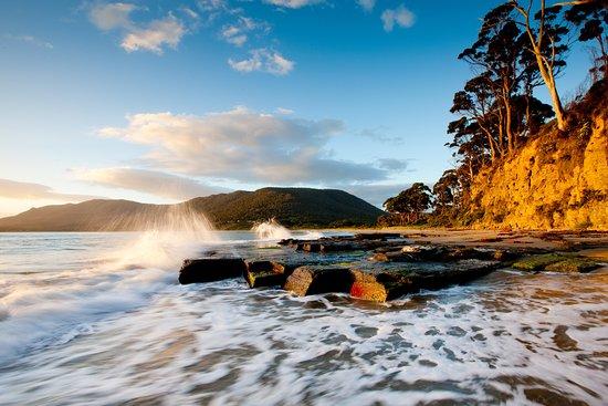 Terroir Wine Tours Tasmania: dv csdhbc sdhb