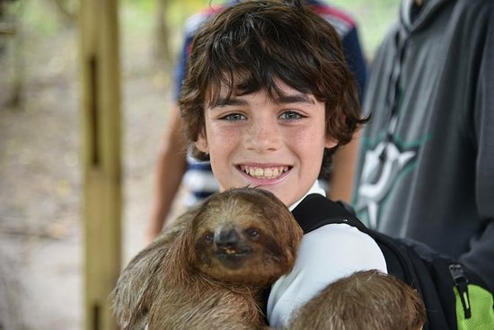 Liberty of the Seas: We all fell in love with the Sloths I'm Roatan