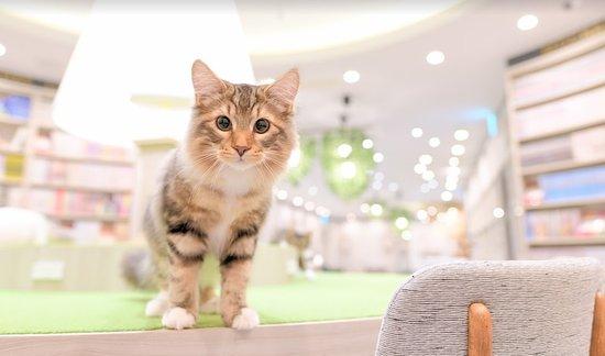 Cat Cafe Mocha, Arche Omiya
