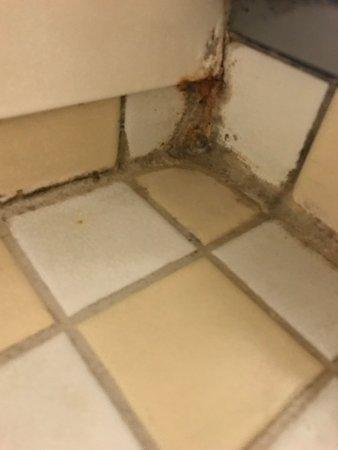 MSC Armonia: Dirty bathroom