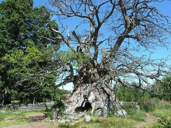 Norra Kvill National Park