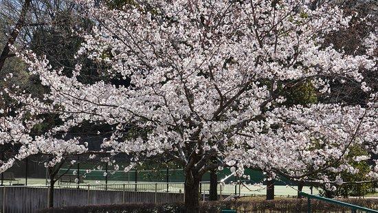 Daimaru Park