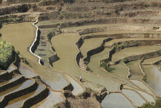 After harvest, muddy terraces