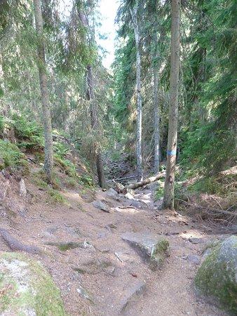 Naturreservatet Skurugata utanför Eksjö