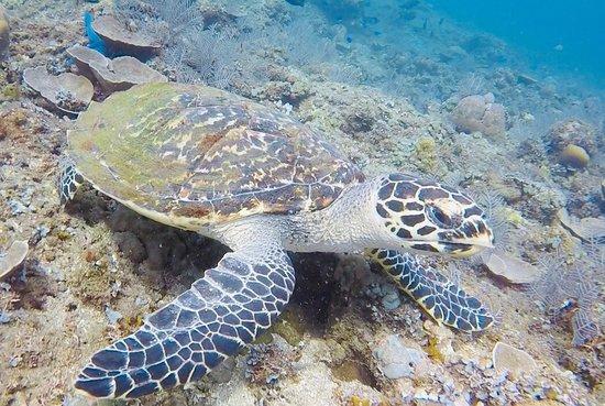 Adventure Divers Bali – fénykép