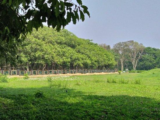 Great Banyan Tree Review Of Acharya Jagadish Chandra Bose Indian Botanic Garden Howrah India Tripadvisor