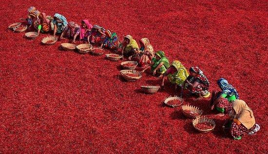 Gaibandha, بنجلاديش: Günün Fotoğrafı 🌞 Photo of the Day  🇧🇩 Bangladeş / Gaibandha 📸 Abdul Momin Photography