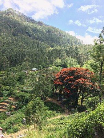 Haputale Mountain Tours: Walking high above tea plantation village