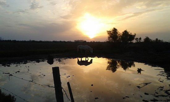 Le Sambuc, Francia: Levé de soleil sur le marais aux chevaux.