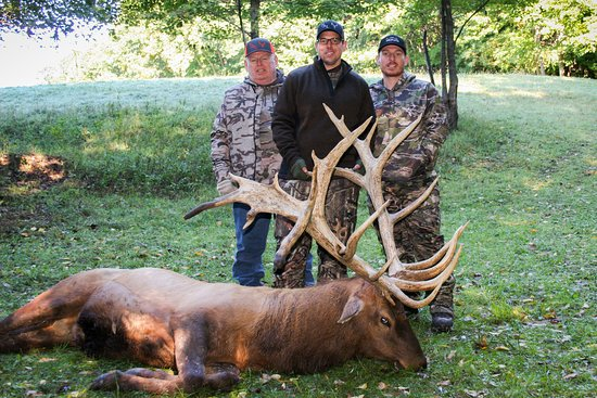 Did you know there's elk hunting in Wisconsin? Northwoods Antler Lodge offers 5 star trophy elk hunting!