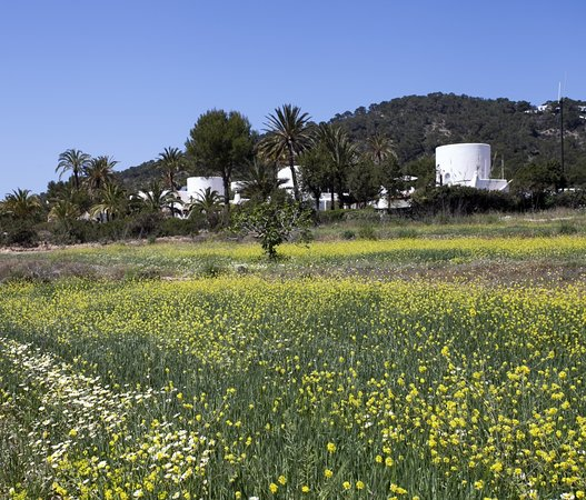 Pictures of Calador - Ibiza Photos - Tripadvisor