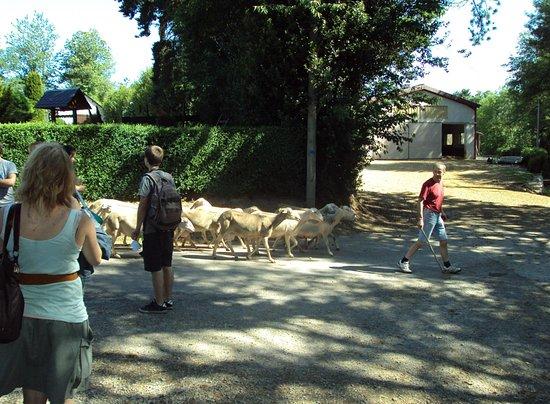 Le Jardin de Chalets: L'élevage de brebis de la ferme