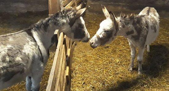 Le Jardin de Chalets: Les animaux de la ferme, les ânes.