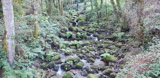A Mirada Maxica: Bosques De Parada