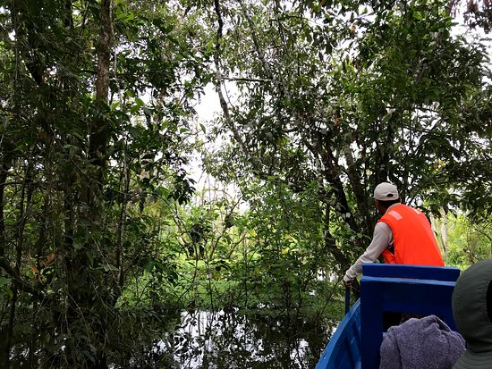 Iquitos Amazon Region, Peru: Flooded forest boat ride with Muyuna Amazon Lodge