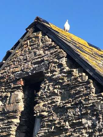 Dove on top of old building at The Chancery