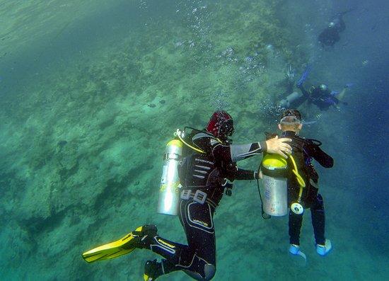 Crazy Dolphin Diving Center: Интро-дайв с ребенком (9 лет).