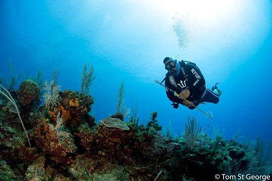 Neptune's Cove