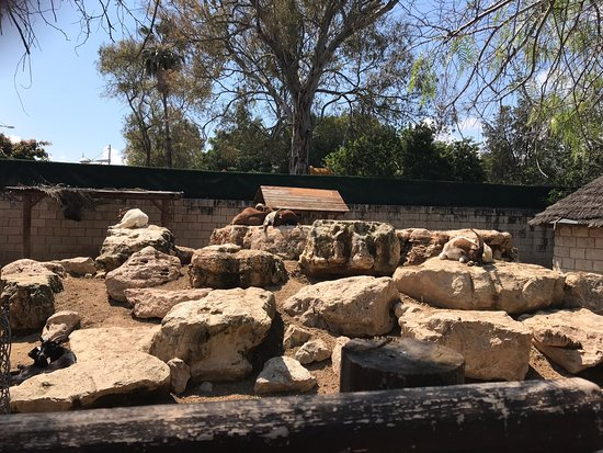 Limassol Zoo: Zoo