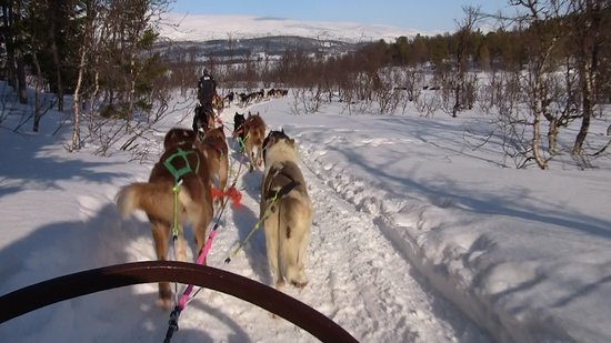 Husky Sledding Ride Including Campfire Lunch from Tromso: Behind the team of huskies