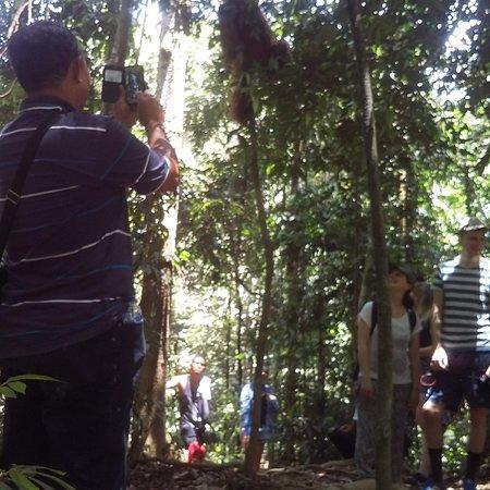 Nemačka: Trekking see orang utan bukit lawang