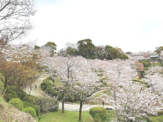 Kikuchi Park