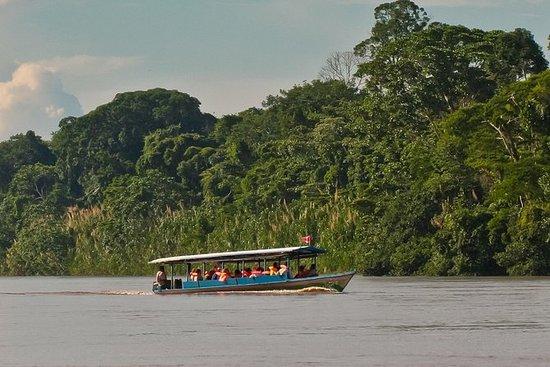 3-dages Amazon Jungle Tour på...