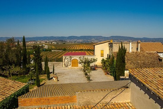 Penedes Region Wine and Food Tour with...