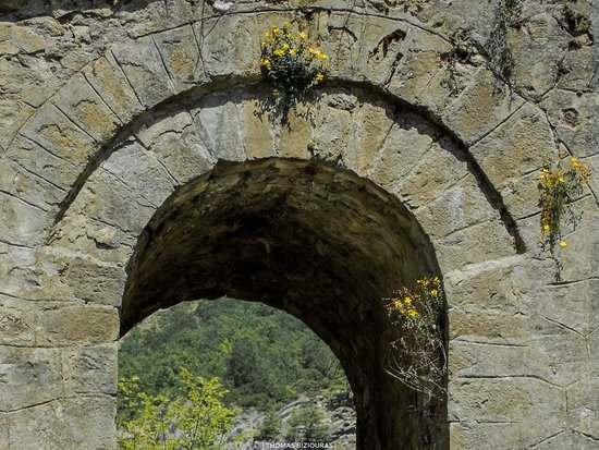 Grevena, Greece: Wild flowers growing among the rocks