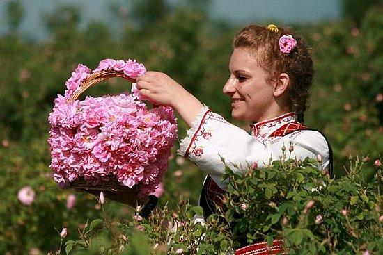 La vallée des roses et Koprivshtitsa