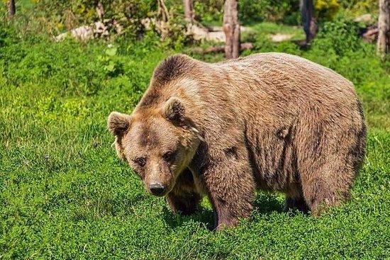 Libearty Brown Bears Sanctuary...